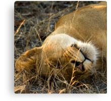 Kruger National Park, South Africa. 2009 VI Canvas Print