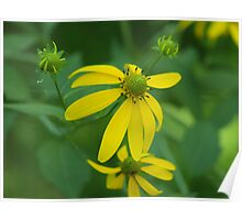 Creekside Wildflowers Poster