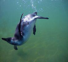 Underwater penguin by Hugh Mitchell