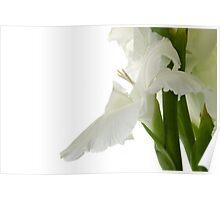 White Gladiola Poster