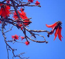 red rocket blue by marella