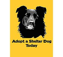 Adopt a Shelter Dog Today Photographic Print