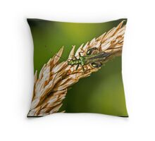 Irridescent Green Beetle (Oedemera noblis) Male Throw Pillow