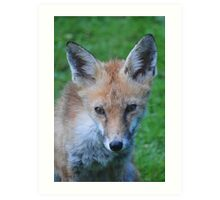Portrait of Mr Fox Art Print