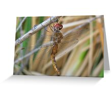 Dragonfly ~ Wandering Glider (Male) Greeting Card