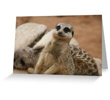 No I am Meerkat. You want Mere Cats you go Other Way. Greeting Card