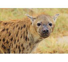 Spotted Hyena - Predator Supreme Photographic Print