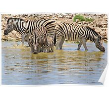 Zebra - Living a Colorful Life Poster