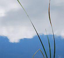 serenity by Dane Austin