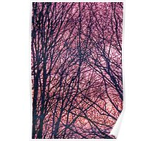 Silhouette Trees Sunset Poster