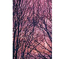 Silhouette Trees Sunset Photographic Print