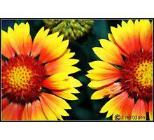 Dos Floras Photographic Print