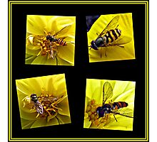 Four Bees on a Yellow Dahlia Collage Photographic Print