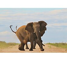 Elephant - Powerful Life Photographic Print