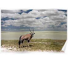 Oryx / Gemsbok,  and Etosha National Park ,Saltpan, Namibia, Africa. Poster