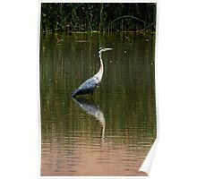 Great Grey Heron Poster