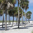 A Group of Palms by Junebug60