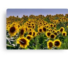 Rows of Sunflowers Canvas Print