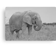 Elephant Bull - Wildlife Peace and Harmony Canvas Print