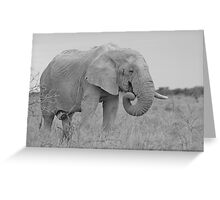 Elephant Bull - Wildlife Peace and Harmony Greeting Card