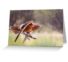The Brown Falcon Greeting Card