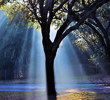 The Tree of Light by Jeff Ore