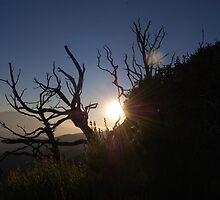 stick trees. by Amanda Huggins
