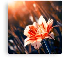 Blossom Flower Canvas Print