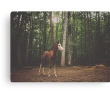 Flirt the Foal Canvas Print