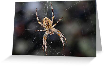 Boris The Spider by Gary Fairhead