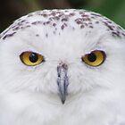 I'm watching you  by Doug Cargill