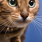 Whiskers by Jan Cartwright