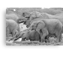 Elephant Family - Tusks and Trunks Canvas Print