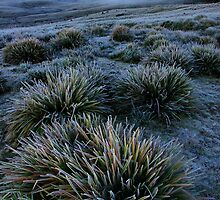 Frosty Morning by Harry Oldmeadow
