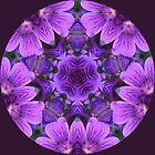 Wild Geranium Kaleidoscope by Jan  Tribe