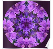 Wild Geranium Kaleidoscope Poster