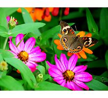 Butterfly Polka Dots Photographic Print