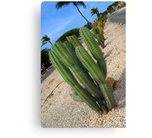 Prickly Aruba Canvas Print