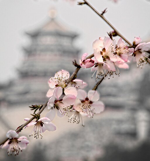 Cherry blossom at Summer Palace by Jennifer Bailey