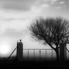 Misty Morning on a Free State Farm  006- South Africa by Qnita