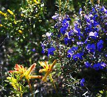 Wonderful colour in the Aussie bush by georgieboy98