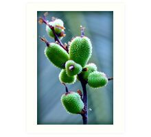 Macro Fruit Art Print