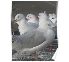 Seagull Corroboree Poster