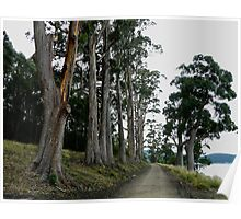 Gum Trees - Old And Colourful Poster