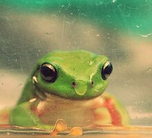 How much is the froggy in the window? by Caity H