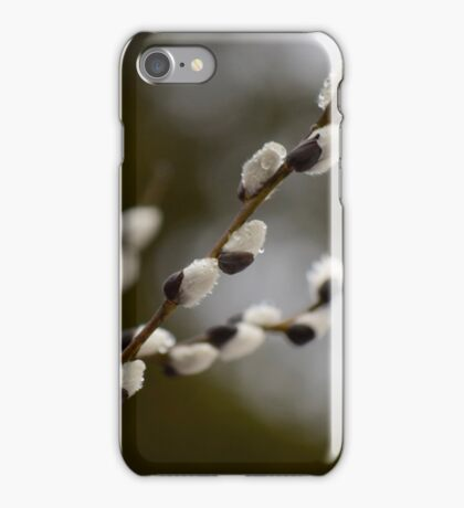 Pussy Willow in the Rain iPhone Case/Skin