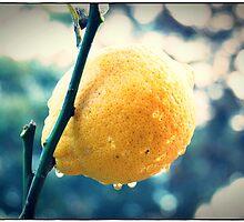 Raindrops on ripe lemon by melindaonleave