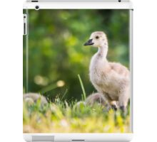 Baby Duckling in the Morning Light iPad Case/Skin