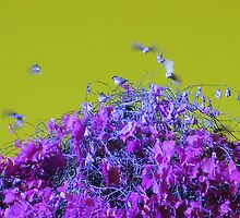"""""""Top of the Heap"""" - Olive & Purple by Deb  Badt-Covell"""
