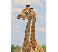 Giraffe - Symmetrical Same Photographic Print